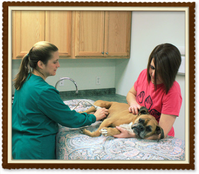 Diagnostic Services offered by Tower Hill Animal Hospital